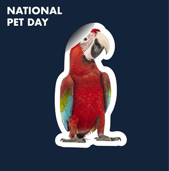 National Pet Day Competition Image 4